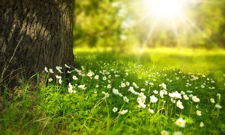 Flores Tanatorio M30 .html